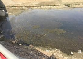 微生物土壤改良与河道治理技术(图13)