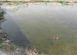 微生物土壤改良与河道治理技术(图14)