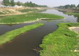 微生物土壤改良与河道治理技术(图16)